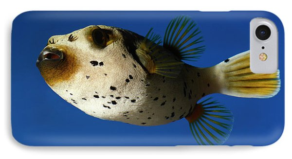 Dogface Pufferfish IPhone Case by Nigel Downer