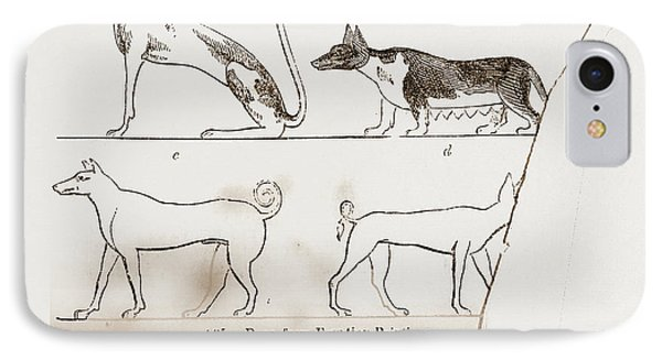 Dogs, From Egyptian Paintings IPhone Case by Litz Collection