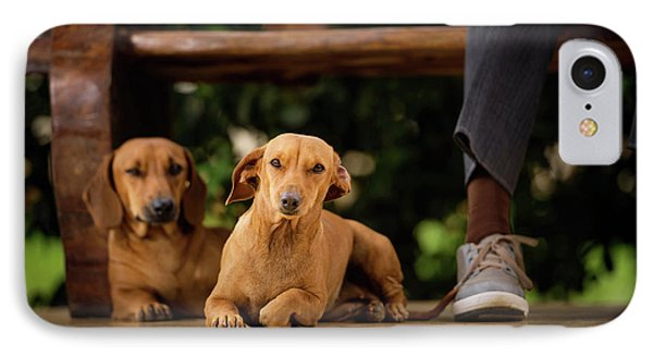 Dogs Lying On Floor Under Table IPhone Case by Ktsdesign