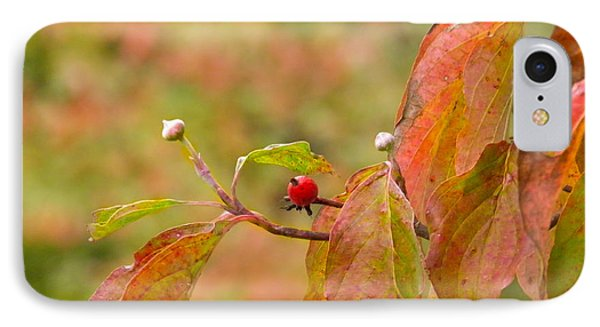 IPhone Case featuring the photograph Dogwood Berrie by Nick Kirby
