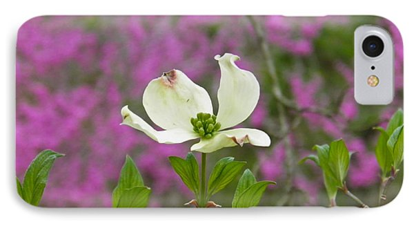 Dogwood Bloom Against A Redbud IPhone Case by Nick Kirby