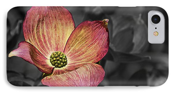 Dogwood Bloom IPhone Case by Ron Roberts