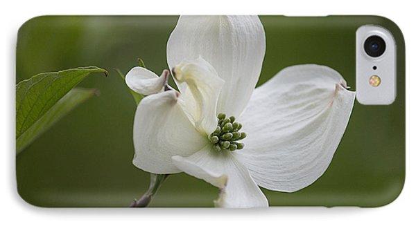 Dogwood Blossom Phone Case by Arlene Carmel