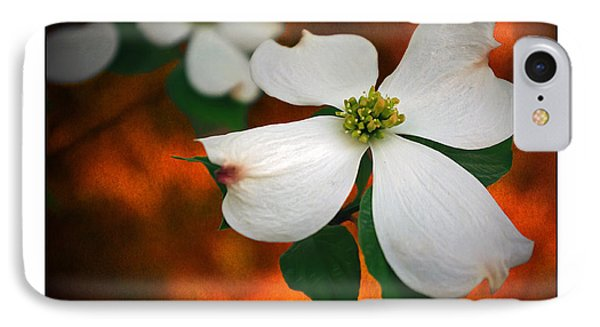 Dogwood Blossom IPhone Case by Brian Wallace
