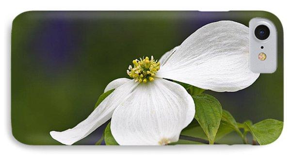 Dogwood Blossom - D001797 IPhone Case