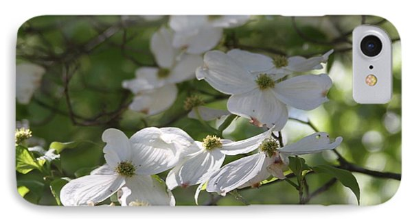 Dogwood Blossoms 3 IPhone Case by Cathy Lindsey