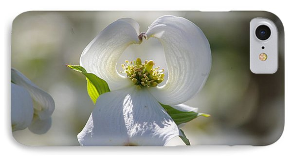 IPhone Case featuring the photograph Dogwood Flower by Tannis  Baldwin