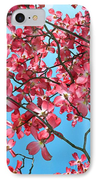 Dogwood Tree Flowers And Blue Sky IPhone Case