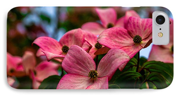 Dogwoods In Bloom IPhone Case