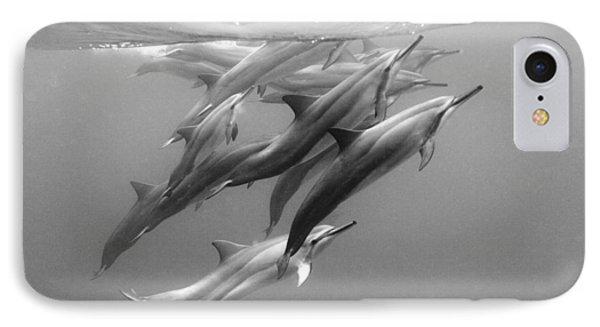 Dolphin Pod IPhone Case by Sean Davey
