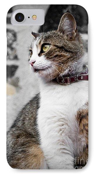 Domestic Cat Phone Case by Jelena Jovanovic