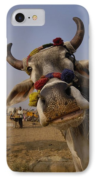 Domestic Cattle India IPhone Case