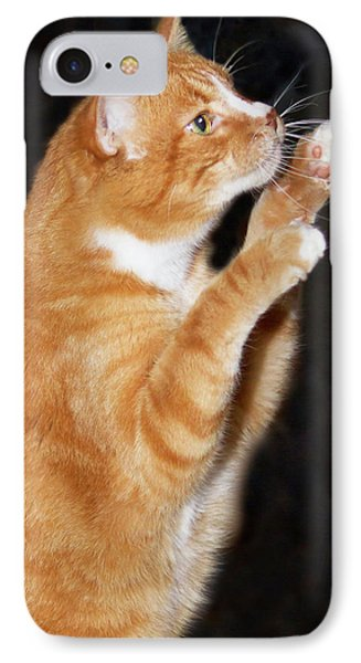 Domestic Shorthair Cat Up On Hind Legs IPhone Case