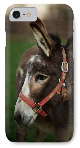 Donkey IPhone Case by Shane Holsclaw