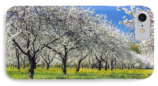 Door County Cherry Blossoms IPhone Case