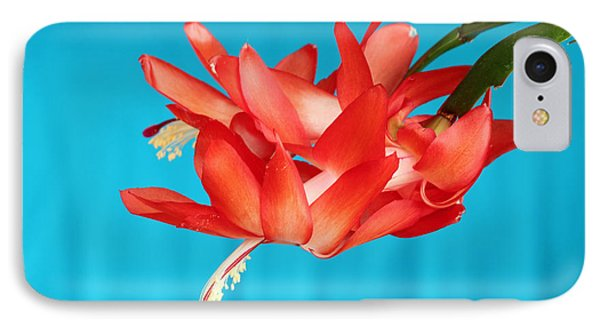Double Bloom In Red IPhone Case