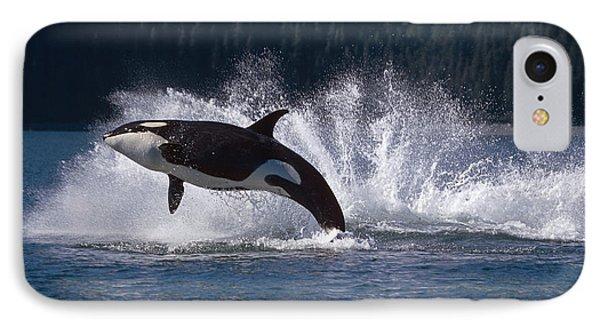 Double Breaching Orcas Bainbridge IPhone Case