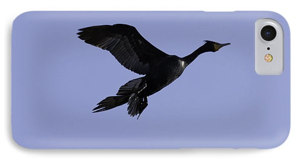 Double-crested Cormorant Coming In. IPhone Case