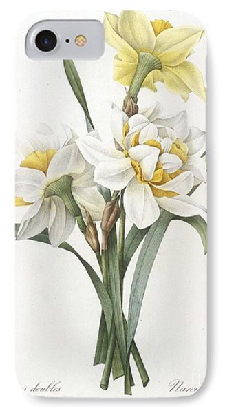 Double Daffodil IPhone Case by Pierre Joseph Redoute