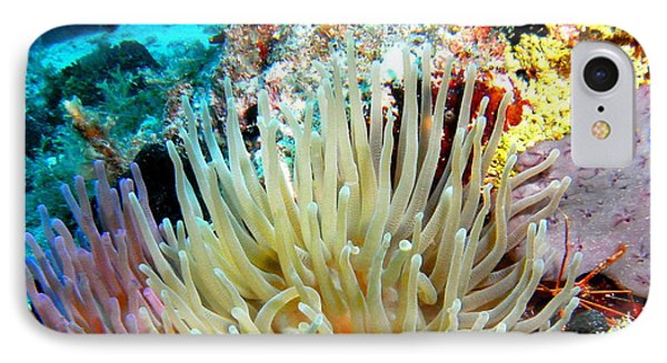 IPhone Case featuring the photograph Double Giant Anemone And Arrow Crab by Amy McDaniel