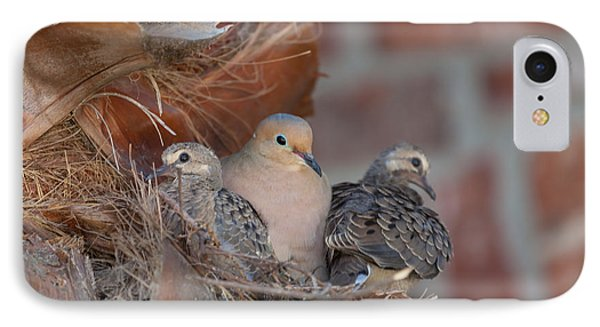 IPhone Case featuring the photograph Dove Nest 4 by Gregory Daley  PPSA