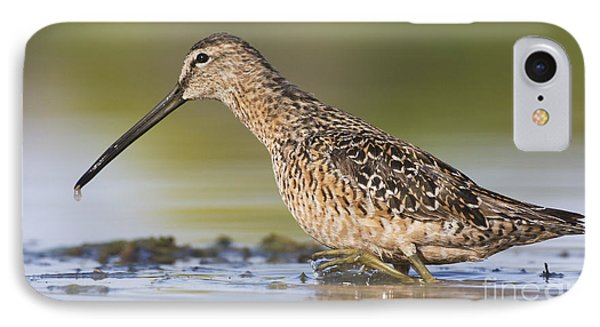 Dowitcher In The Water IPhone Case by Ruth Jolly