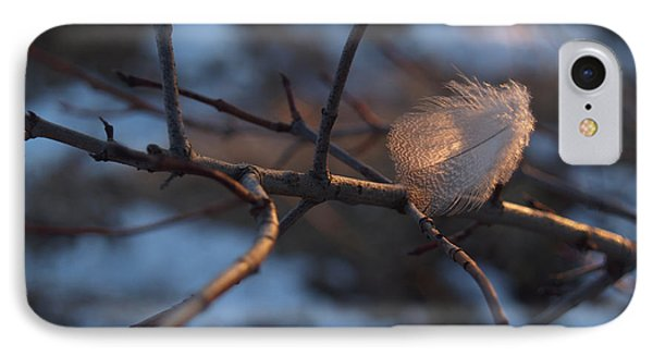 Downy Feather Backlit On Wintry Branch At Twilight Phone Case by Anna Lisa Yoder