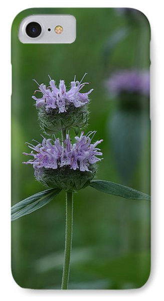 IPhone Case featuring the photograph Downy Wood Mint by Daniel Reed
