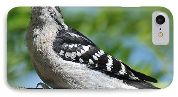 Downy Woodpecker 302 IPhone Case