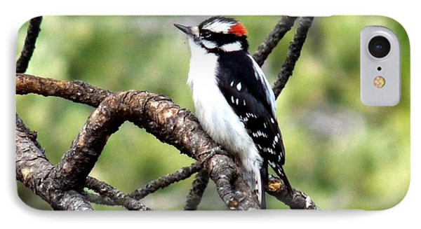 Downy Woodpecker IPhone Case