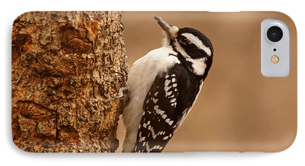 Downy Woodpecker IPhone Case by Sandy Keeton