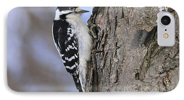 Downy Woodpecker Phone Case by Tony Beck