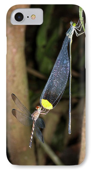 Dragonfly And Damselfly Roosting IPhone Case