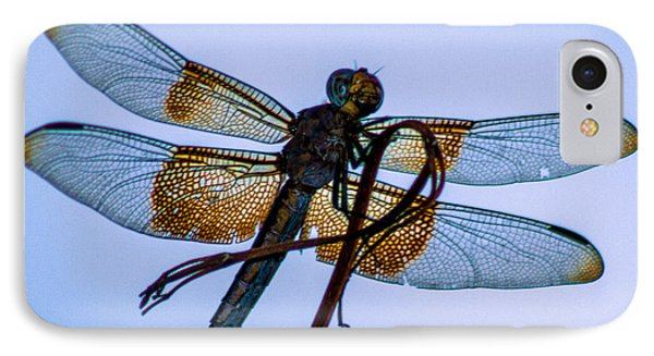 Dragonfly-blue Study IPhone Case by Toma Caul
