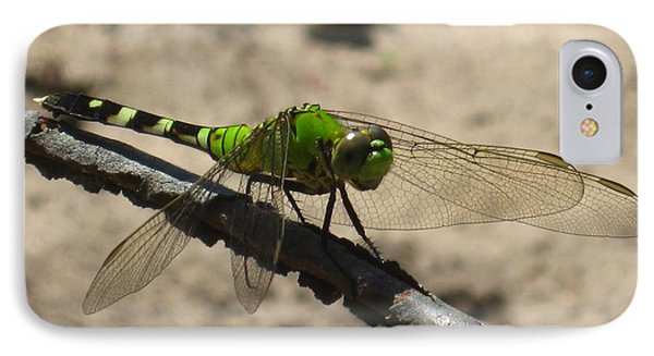 Dragonfly Eastern Pondhawk IPhone Case