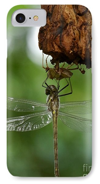 Dragonfly IPhone Case by Jane Ford