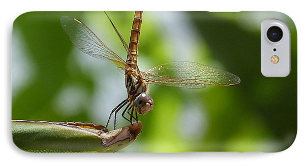 IPhone Case featuring the photograph Dragonfly by Janina  Suuronen