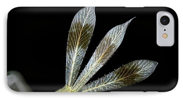 Dragonfly Larva Gills IPhone Case by Frank Fox