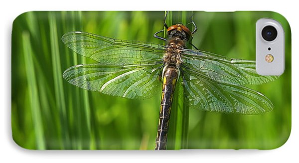 Dragonfly On Grass IPhone Case by Sharon Talson