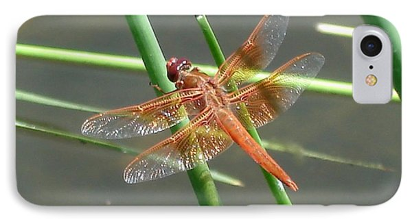 IPhone Case featuring the photograph Dragonfly Orange by Kerri Mortenson