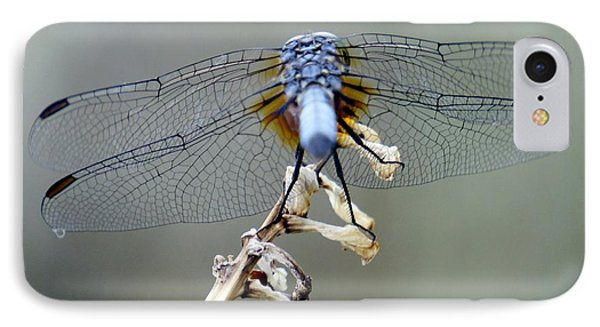Dragonfly Wing Details II IPhone Case