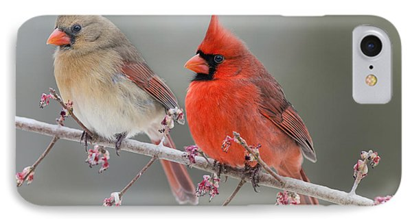 Dreamy Redbirds IPhone Case