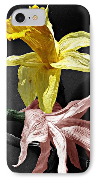 IPhone Case featuring the photograph Dried Daffodils by Nina Silver