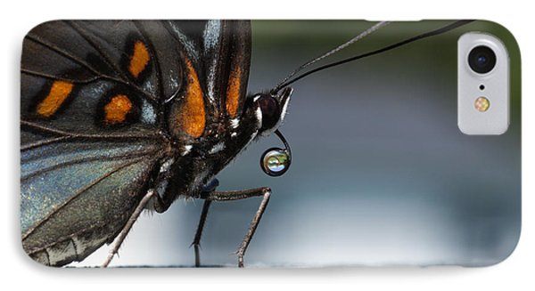 IPhone Case featuring the photograph Drinking Dew Drops 2 by David Lester