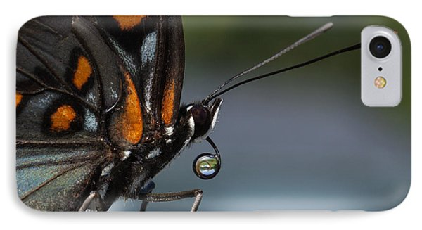 IPhone Case featuring the photograph Drinking Dew Drops 3 by David Lester