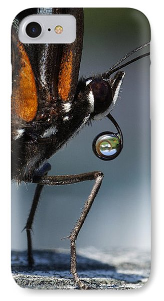 Drinking Dew Drops 6 IPhone Case by David Lester