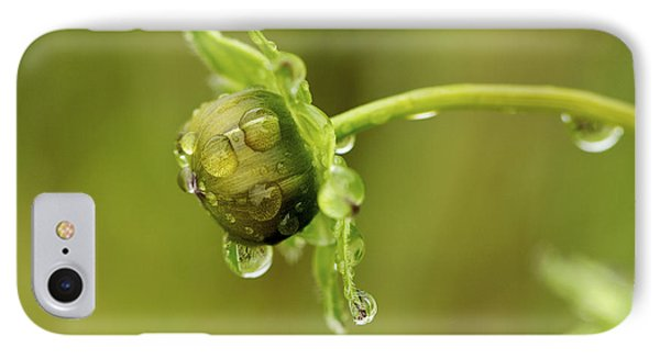 Drip Drip - Raindrops On Coreopsis  IPhone Case