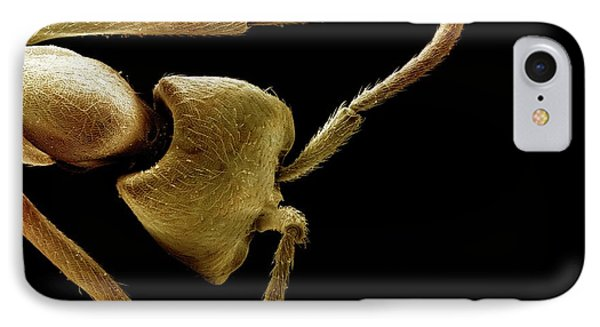 Driver Ant Head IPhone Case by Clouds Hill Imaging Ltd