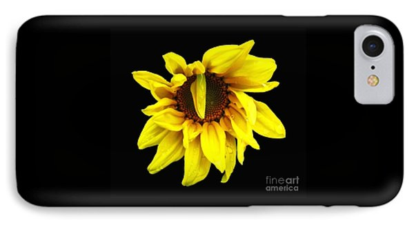 Droops Sunflower With Oil Painting Effect IPhone Case by Rose Santuci-Sofranko