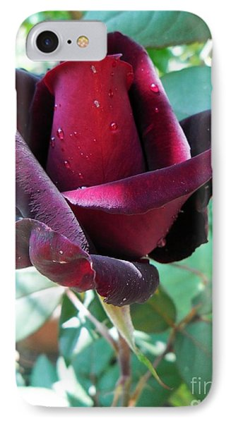 IPhone Case featuring the photograph Droplets On The Petals by Vesna Martinjak